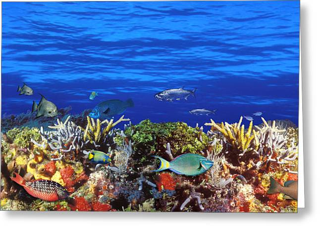School Of Fish Greeting Cards - School Of Fish Swimming Near A Reef Greeting Card by Panoramic Images