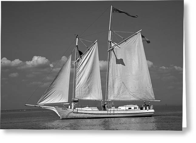 Sailboat Photos Greeting Cards - Schooner Sailing in Mobile Bay Greeting Card by Mountain Dreams