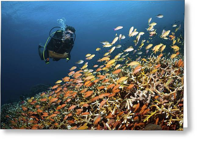 Scuba Diving Greeting Card by Science Photo Library
