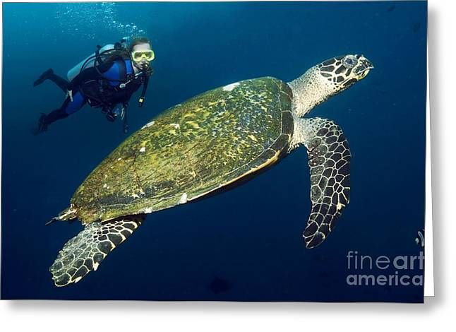 Critically Endangered Animal Greeting Cards - Scuba Diving With A Hawksbill Turtle Greeting Card by Georgette Douwma