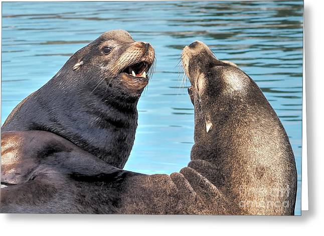 California Sea Lions Greeting Cards - Sea Lions Greeting Card by   FLJohnson Photography