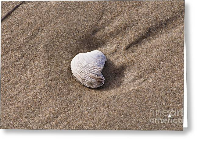 Newport Greeting Cards - Sea Shell Greeting Card by Mandy Judson