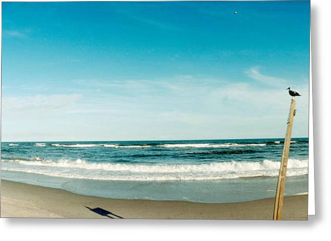 York Beach Greeting Cards - Seagull Standing On A Wooden Post Greeting Card by Panoramic Images