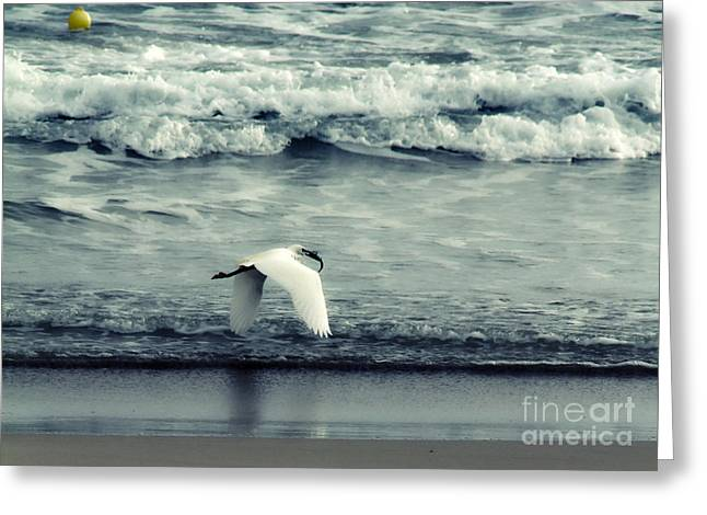 Actions Greeting Cards - Seagull  Greeting Card by Stylianos Kleanthous