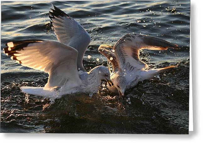 Wild Life Pyrography Greeting Cards - Seagulls In Fight Greeting Card by Valia Bradshaw