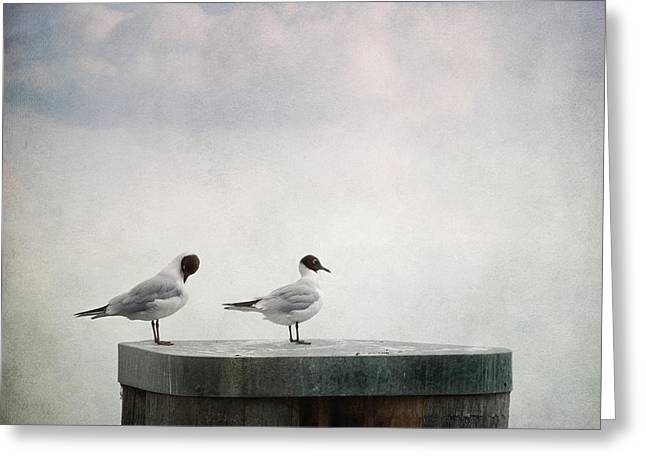 Blue Bird Greeting Cards - Seagulls Greeting Card by Priska Wettstein