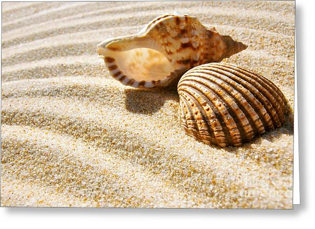 Shell Texture Greeting Cards - Seashell and Conch Greeting Card by Carlos Caetano