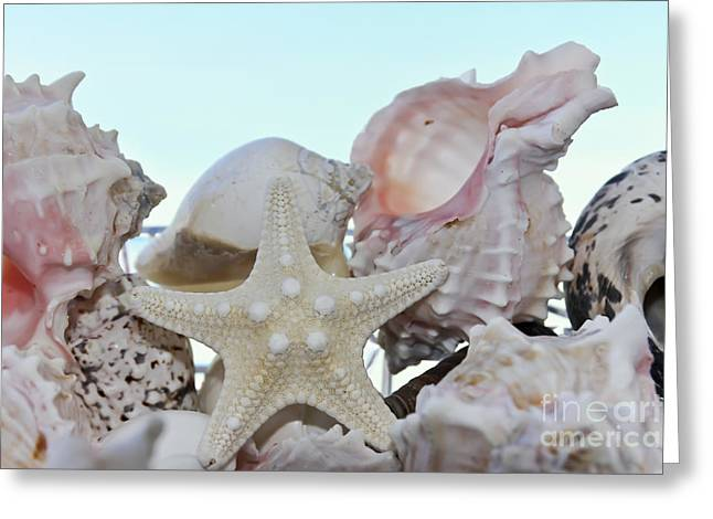 """""""still Life Photographs"""" Greeting Cards - Seashells Greeting Card by Sophie Vigneault"""