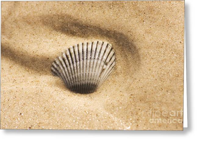 Moist Greeting Cards - Seaside Seashell Greeting Card by Ryan Jorgensen