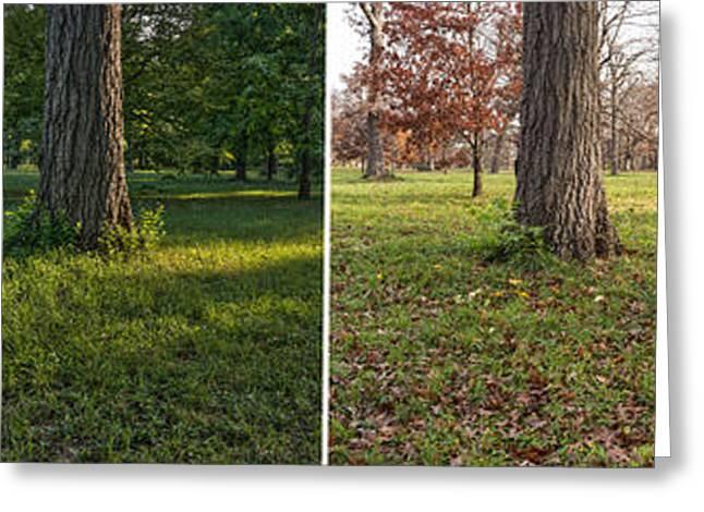 Autumn Flowers Greeting Cards - Seasonal Passage Number 2 Greeting Card by Steve Gadomski