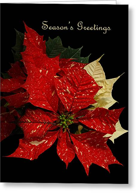 Green Foliage Greeting Cards - Seasons Greetings Greeting Card by Angie Vogel