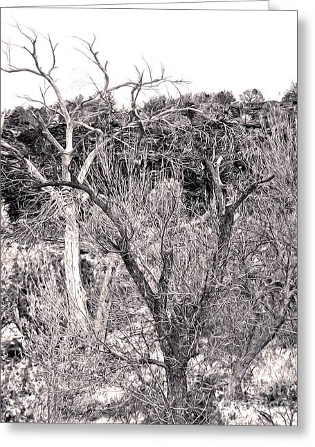 Sedona Arizona Dead Tree Greeting Card by Gregory Dyer