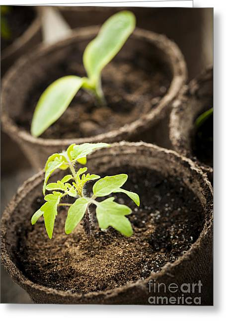 Cultivation Greeting Cards - Seedlings  Greeting Card by Elena Elisseeva