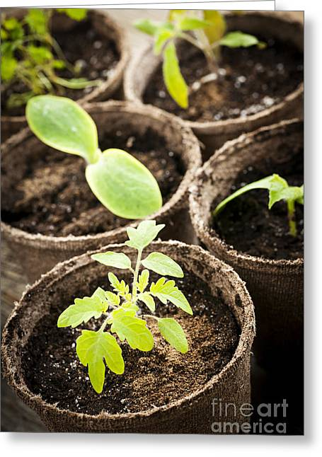 Seedlings Growing In Peat Moss Pots Greeting Card by Elena Elisseeva