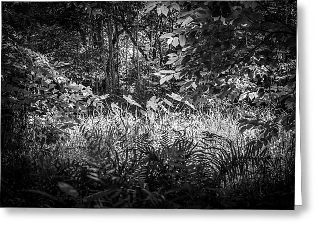 Environmental Center Greeting Cards - Seminole County Florida Environmental Center Along the Florida Trail BW    Greeting Card by Rich Franco
