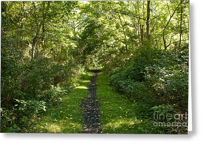 Keuka Greeting Cards - Seneca Keuka Trail Greeting Card by William Norton