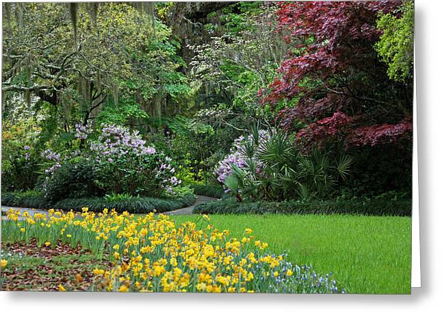 Maple Photographs Greeting Cards - Sensational Springtime - Magical Garden IV Greeting Card by Suzanne Gaff