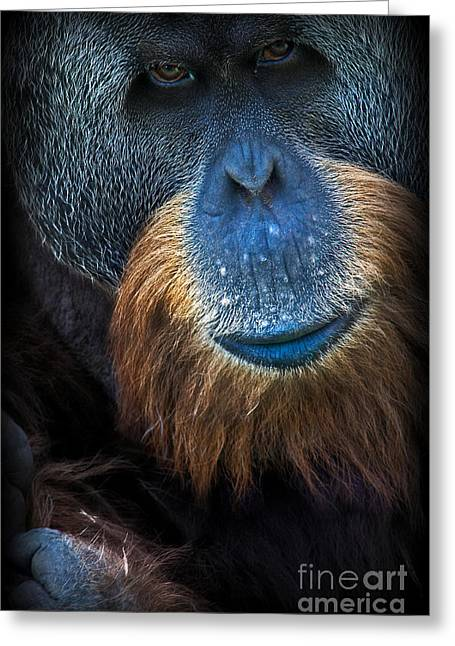 Orang Utans Greeting Cards - Serious Ape Greeting Card by Adrian Tavano