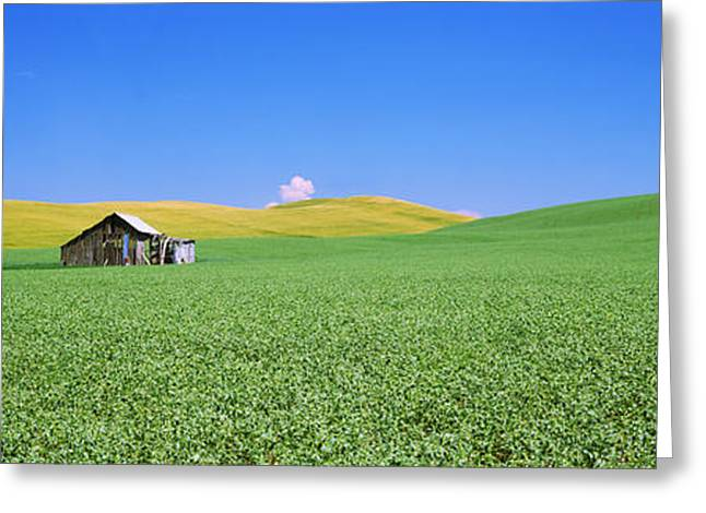 Shack Greeting Cards - Shack In A Field, Palouse County Greeting Card by Panoramic Images