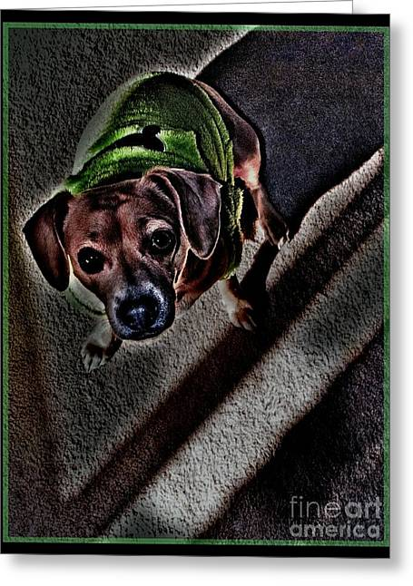 Pound Puppies Greeting Cards - ShaDeD Greeting Card by Angela J Wright