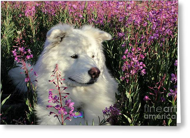 Dog Photographs Greeting Cards - Shadows Greeting Card by Fiona Kennard