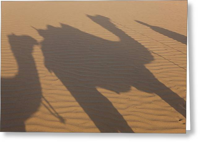 Shadows Of A Camel Train, Thar Desert Greeting Card by Peter Adams