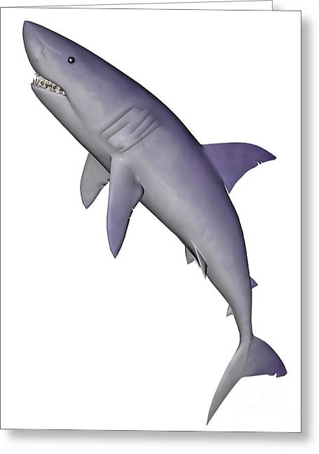 White Shark Greeting Cards - Shark Illustration, White Background Greeting Card by Elena Duvernay