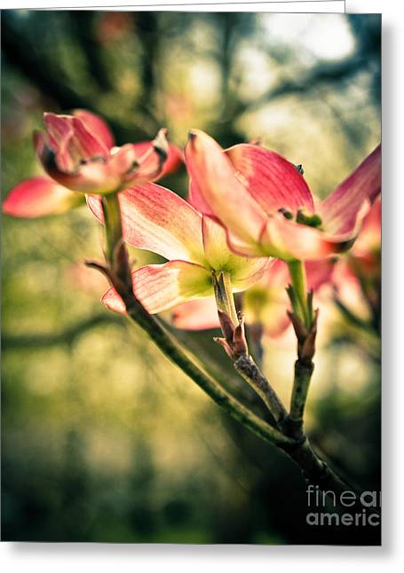 Pink Flower Branch Greeting Cards - Shining Through Greeting Card by Colleen Kammerer