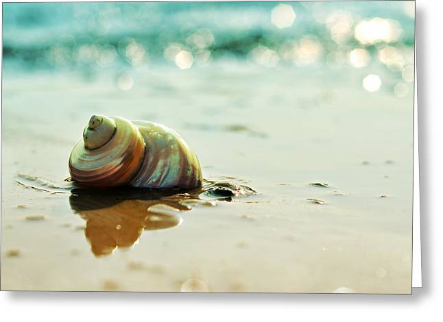 Spiral Shells Greeting Cards - Shore Dweller Greeting Card by Laura  Fasulo