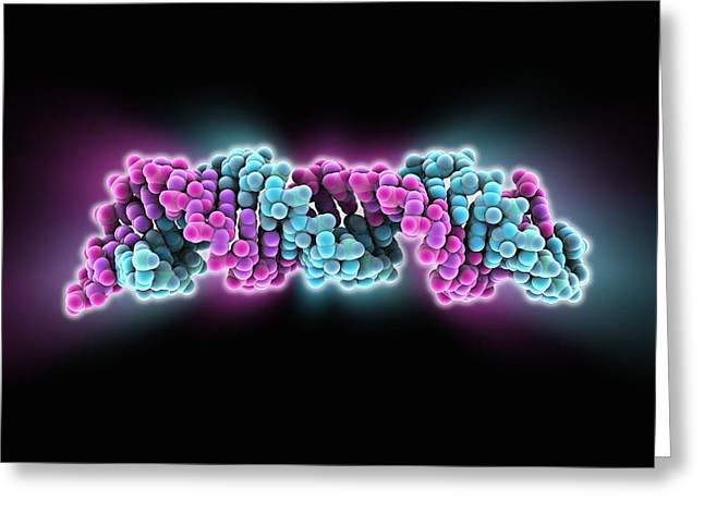 Signal Recognition Particle Rna Molecule Greeting Card by Science Photo Library