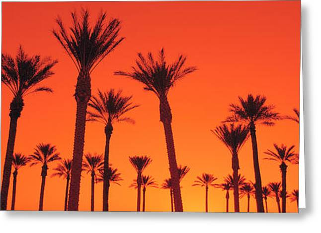 Dated Greeting Cards - Silhouette Of Date Palm Trees In A Row Greeting Card by Panoramic Images