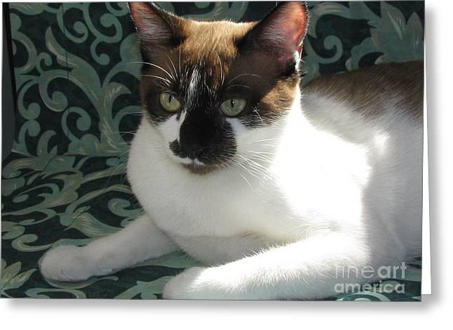 Photos Of Kittens Greeting Cards - SilkTapestryCatsTM Greeting Card by Pamela Benham