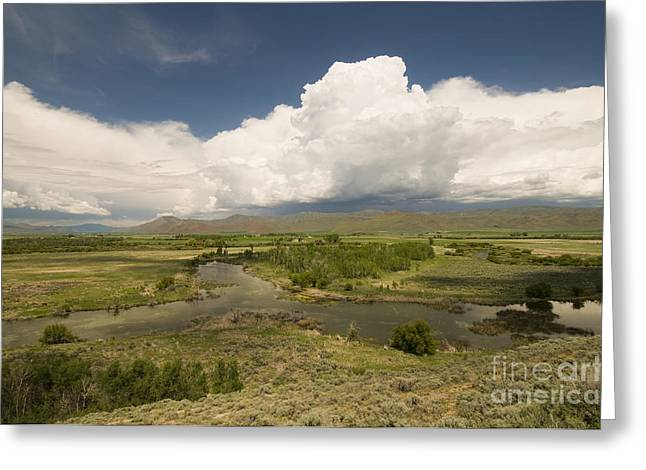 Fishing Creek Greeting Cards - Silver Creek, Idaho Greeting Card by William H. Mullins
