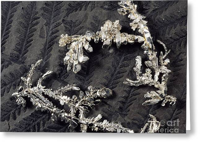 Lustrous Greeting Cards - Silver Crystals Greeting Card by Dirk Wiersma