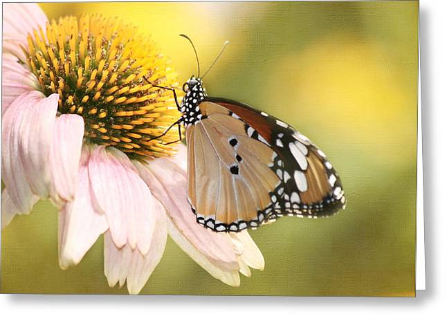 Simple Pleasures Greeting Card by Kim Hojnacki