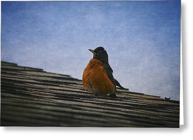 Migratory Bird Greeting Cards - Singing On The Roof Greeting Card by Maria Angelica Maira