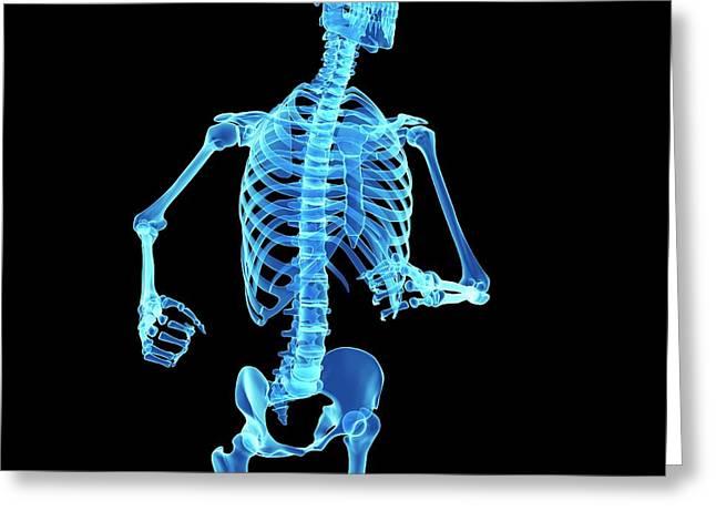 Skeletal System Of Jogger Greeting Card by Sebastian Kaulitzki