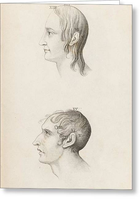 Skull Comparisons In Phrenology Greeting Card by King's College London