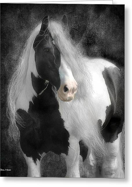 Gypsy Vanner Horse Greeting Cards - Slainte Greeting Card by Fran J Scott
