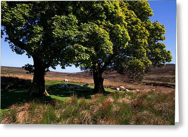 Liffey Greeting Cards - Small Group Of Trees, East Kippure Greeting Card by Panoramic Images