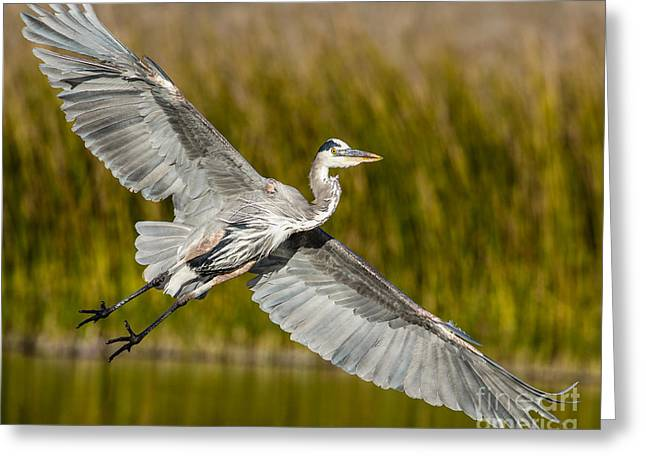 Ardea Greeting Cards - Smooth Landing Greeting Card by Carl Jackson