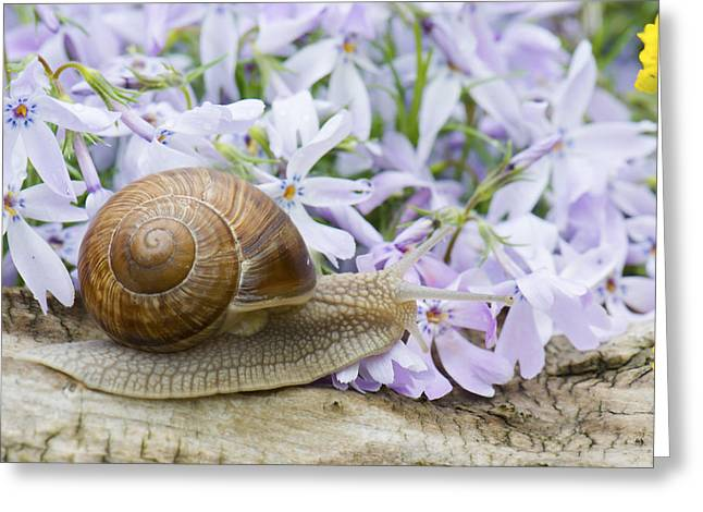 Snail Greeting Card by Jaroslaw Grudzinski