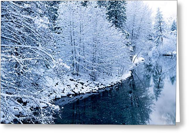 Reflections In River Greeting Cards - Snow Covered Trees Along A River Greeting Card by Panoramic Images