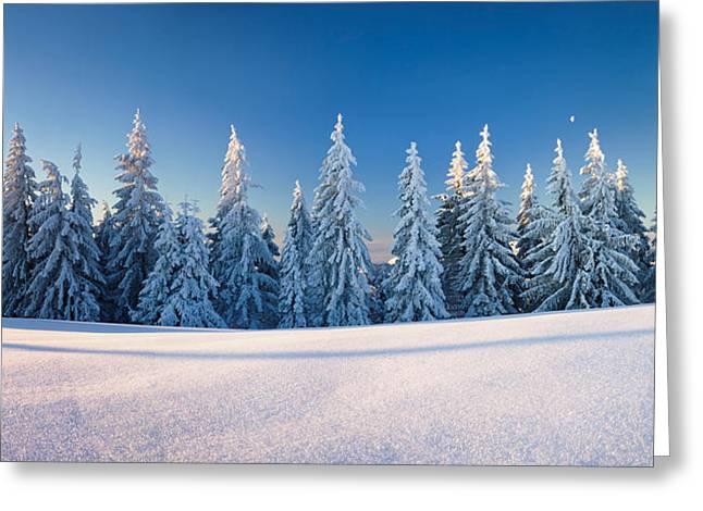 Snow Scene Landscape Greeting Cards - Snow Covered Trees On A Landscape Greeting Card by Panoramic Images