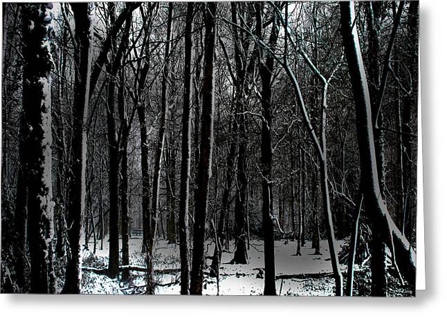 Snow Covered Woodland Greeting Card by Martin Newman