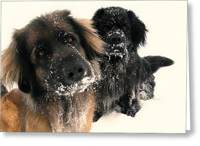 Dog In The Snow Greeting Cards - Snow Day Greeting Card by Mountain Dreams