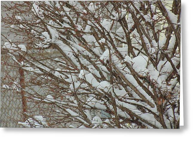 Snowstorm Framed Prints Greeting Cards - Snow in Michigan Greeting Card by Dotti Hannum