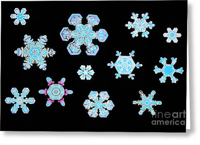 Patterns In Nature Greeting Cards - Snowflakes Greeting Card by Scott Camazine
