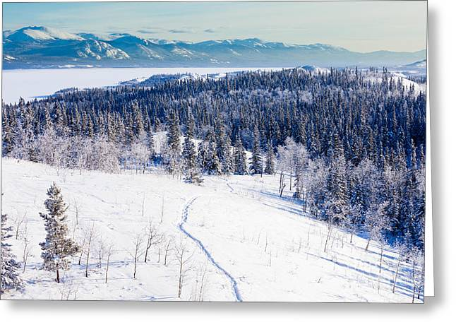 Snow-covered Landscape Greeting Cards - Snowshoe taiga trail landscape Yukon T Canada Greeting Card by Stephan Pietzko