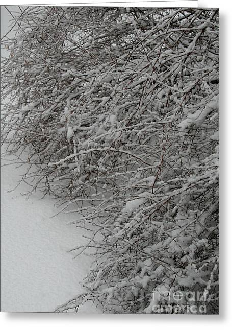 Snow-covered Landscape Greeting Cards - Snowy Greeting Card by Susan Herber